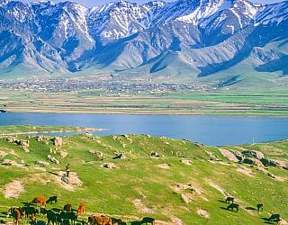English language Tashkent
